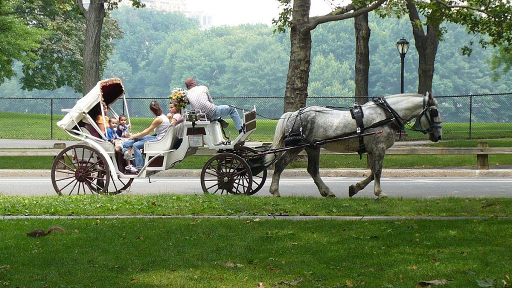 Ride in a horse-drawn carriage through Central Park – for the romantics.