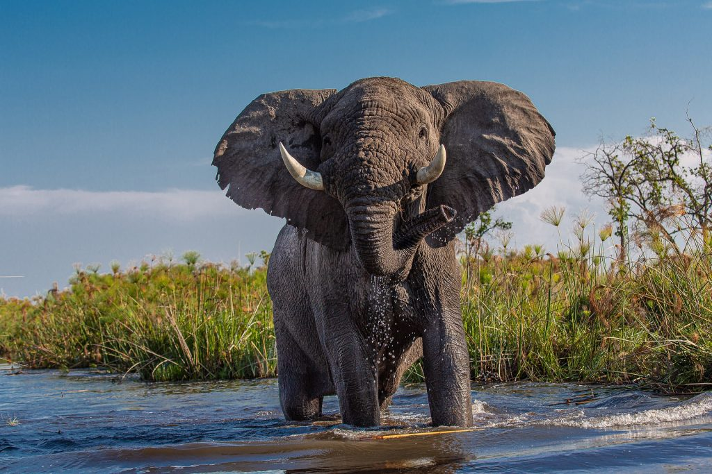 Elephants are actually one of the most dangerous African animals.