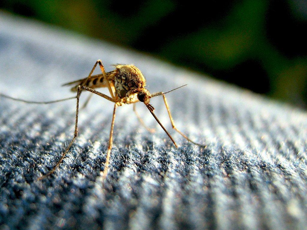 The mosquito is one of the most dangerous African animals.