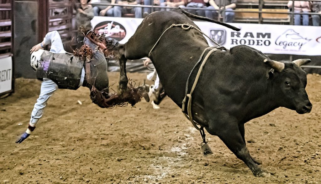 Bull riding is one of the most dangerous sports in the world.