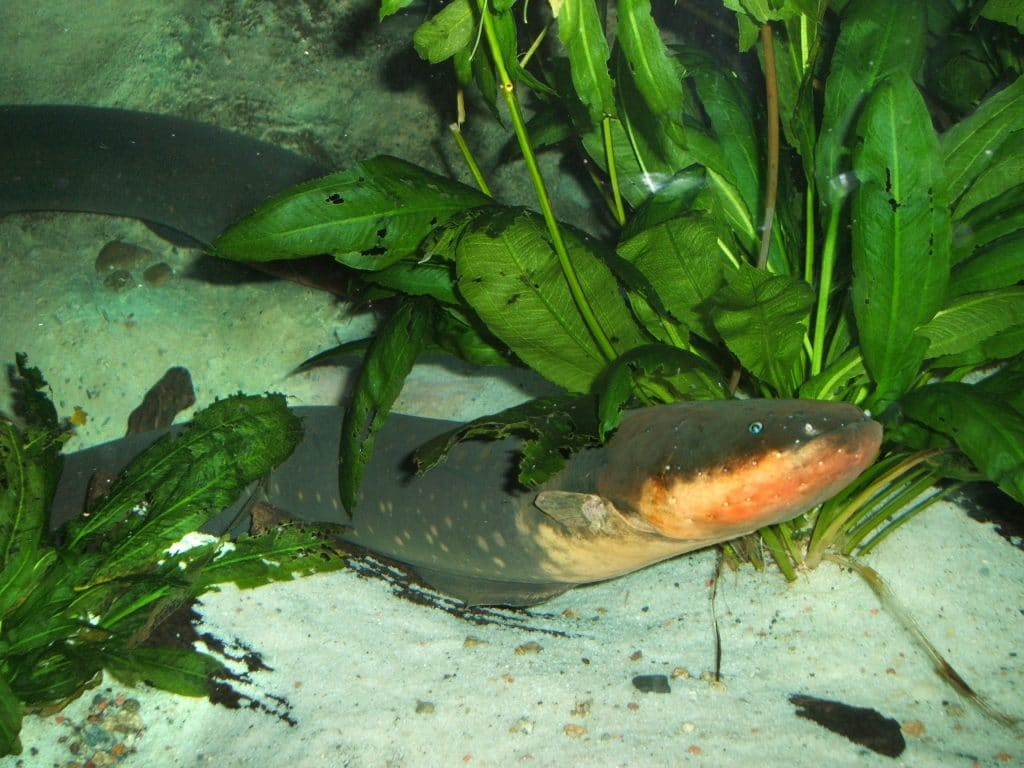 Don't get too close to the Electric eel.