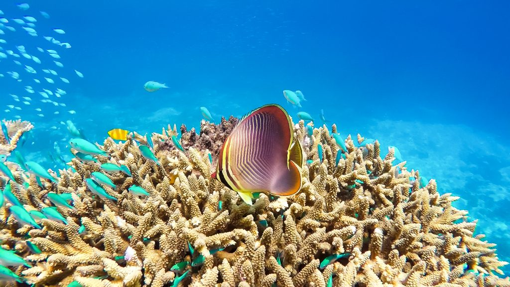 The Great Barrier Reef is one of the top 10 UNESCO World Heritage Sites.