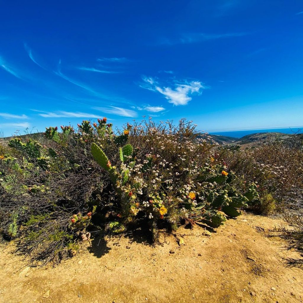 Crystal Cove State Park is one of the best hikes in Orange County.