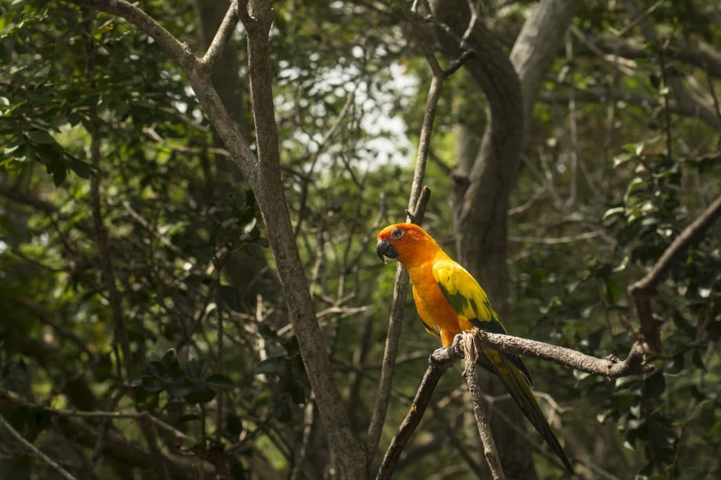 Visit the Amazon for nature in all its glory.