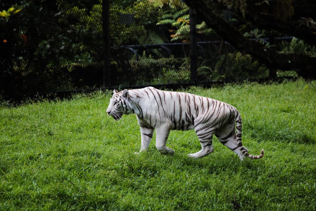 Panaewa Rainforest Zoo is one of the best things to do in Hilo.