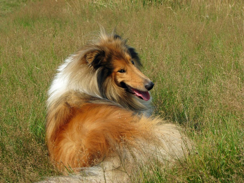 Lassie is a name inspired by the movies.